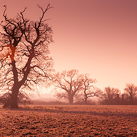 Winter in the countryside with oak tree in a field in Suffolk England