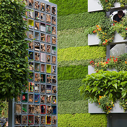 © licensed to London News Pictures. LONDON, UK  23/05/2011. Chelsea Flower Show, Press Day.  Please see special instructions for usage rates. B&Q Garden. Photo credit should read Bettina Strenske/LNP