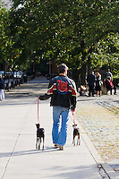 man walking dogs in Brooklyn New York October 2008