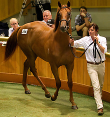 Auckland-Karaka 2012 top sale on first day of Yearling Sales