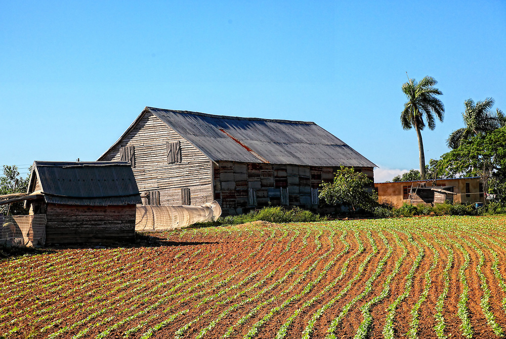 Barn and newly planted tobacco in San Luis, Pinar del Rio. This area is where some of the best cigar leaf in the world comes from.