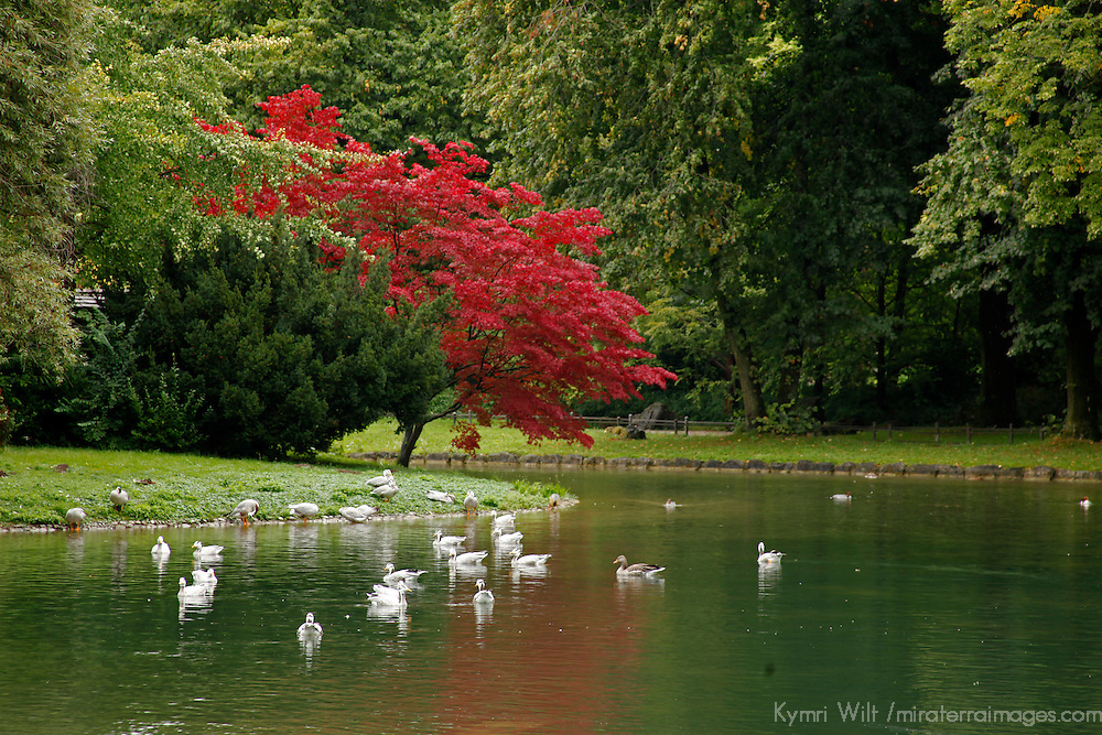 Europe, Germany, Munich.  Englischer Garten, or English Garden of Munich.