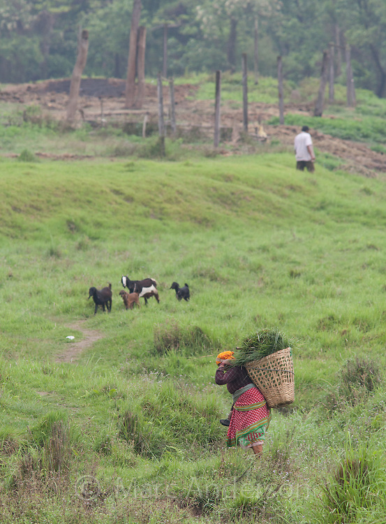 Woman carrying a basket of grass on her back, Chitwan National Park, Nepal