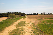Farm track sandy soil of ploughed fields former Sandlings heathland Sutton, Suffolk, England, UK