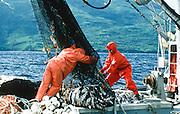 Alaska. Kodiak Island. Uganik Bay. Salmon seining. Commercial fishing vessel,