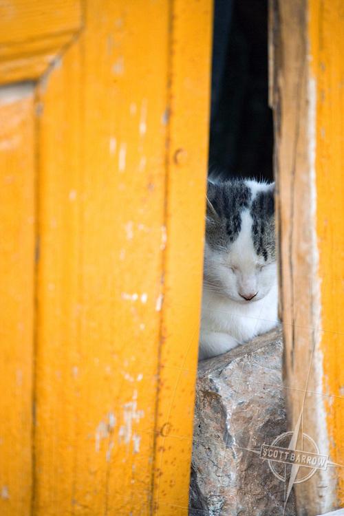 Cat asleep on a rock behind a yellow door on Hydra, Greece.