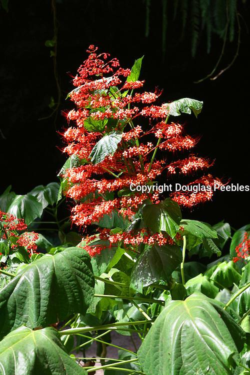 flower, Vaipahi Waterfall and Gardens, Island of Tahiti, French Polynesia<br />