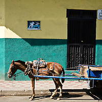 A decrepit working horse outside of the vets office. Granada is Nicaragua's most famous city. founded in 1524 it is one of best examples of Spanish colonial architecture in the Americas. .it has a varied history including its almost total destruction by filibuster William Walker in a childlike tantrum. Today it is a popular tourist town though retains a strong sense of its own identity.