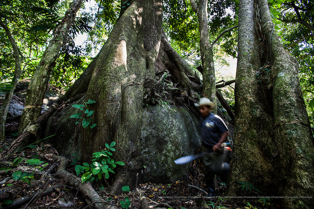 Mexico is one of five countries on Earth that has the greatest biodiversity with 10% of the total world fauna and flora. But 90% of its territory is deforested.  Even more serious is the disappearance in Chiapas of 97% of the tropical rain forests where criollo cocoa beans are grown.