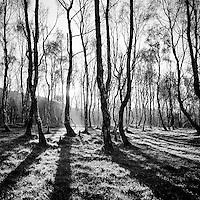 Sunlight shining through trees in winter