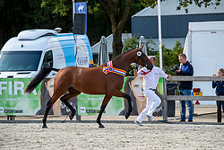 088, Lannamieke VDL<br /> KWPN Kampioenschappen - Ermelo 2019<br /> © Hippo Foto - Dirk Caremans<br /> 088, Lannamieke VDL