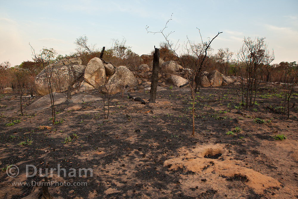 Burned ground after a brush fire in Matobo National Park, part of the Motopos Hills area in Zimbabwe. The fire may have been deliberately set. The park is an U.N. UNESCO World Hertiage Site. © Michael Durham / www.DurmPhoto.com
