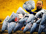 A market worker piles the severed heads of frozen tuna into a wooden crate at the world's largest fish and marine products market in Tsukiji, Tokyo