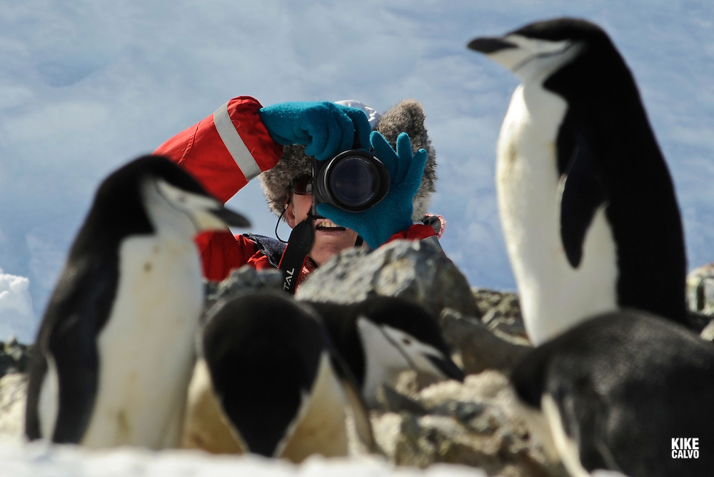 Half Moon Island is a crescent-shaped islet that lies in the entrance to Moon Bay between Livingston and Greenwich Islands. It is home of the Argentine Teniente Camara Station. This beautiful location has Chinstrap penguin nests over majestic basaltic columns. Pictured: Tourist taking a photograph in a Chinstrap Penguin (Pygoscelis antarcticus ) rookery.Model Released photo.