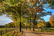 The colors of early fall color the leaves on a horse farm in Hamilton, Massachusetts.