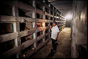 Hou Songfeng in the concrete mausoleum-like breeding room of his scorpion-raising facility: Ru Yang Boda Scorpion Breeding Company,  a new addition to China's burgeoning market economy. The Boda ranch's thirty employees are raising more than three million scorpions for public consumption in a football field-sized brick building; Songfeng would like to expand his market into the United States, Luoyang,  China. (page 94, 95) .