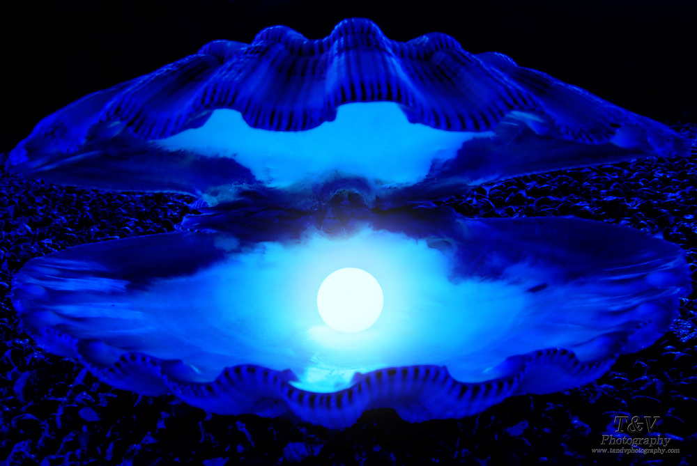 An open shell reveals a brilliant, glowing pearl.Black light