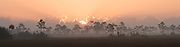 The rising sun melts away the winter mist over the grasslands of the Everglades
