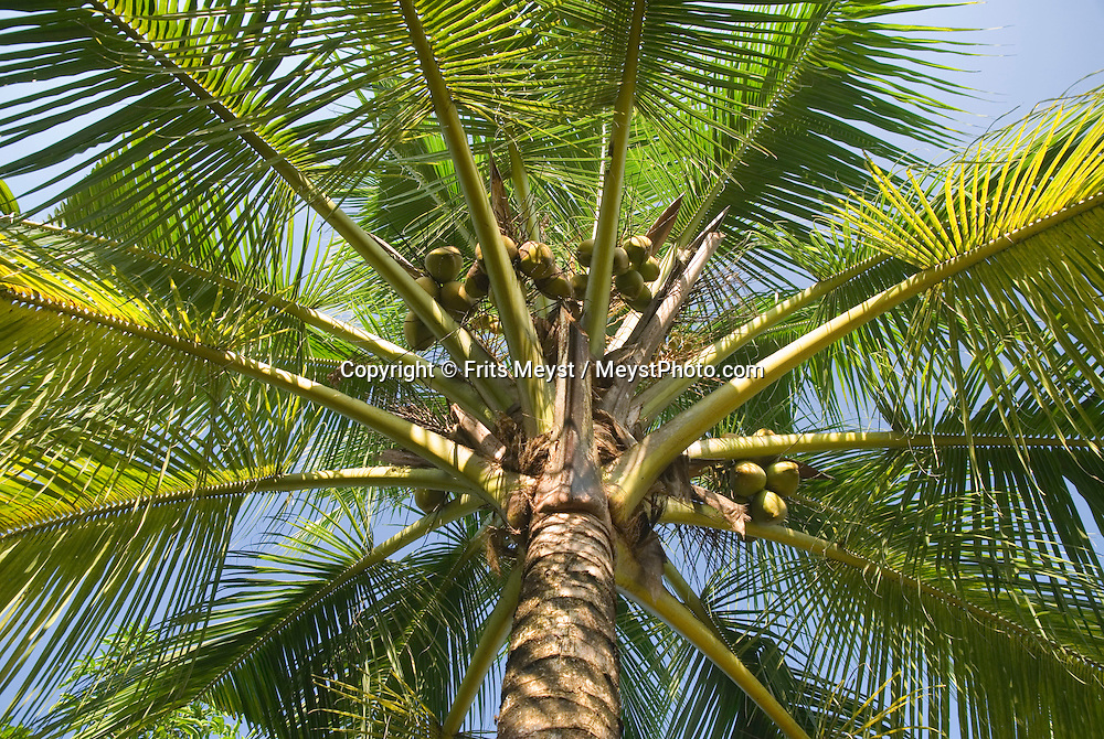 Mararikulam, Kerala, India, April 2008. Marari Beach Resort by CGH Earth is the prime spot for a luxory beach holiday. The backwaters of Kerala and the Malabar coast are reknowned for its rich history and its importance for the spice trade. Photo by Frits Meyst/Adventure4ever.com