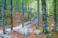 Slovenie, region de Gorenjska, Bohinj, parc national du Triglav, Bohinj // Slovenia, Gorenjska region, Triglav National Park, Bohinj
