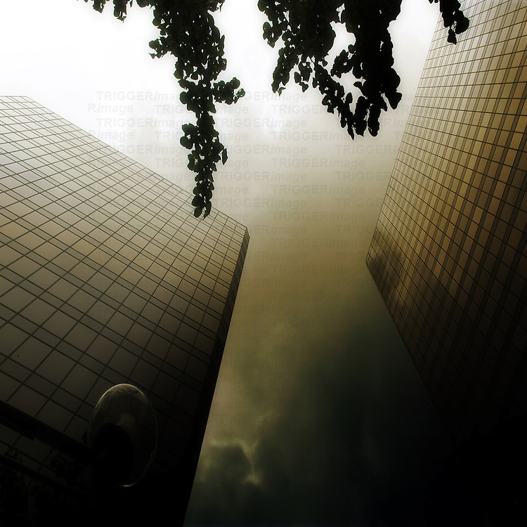 Two high rise buildings with a branch of a tree