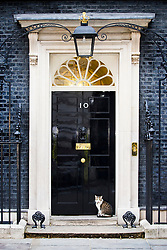 © Licensed to London News Pictures. 12/06/2017. London UK. Larry the cat sit's on the doorstep of number 10 Downing Street ahead of Theresa May's first Cabinet meeting since the General Election this afternoon. Photo credit: Andrew McCaren/LNP