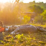 WILDLIFE ACT & WILDLANDS - SOMKHANDA RESERVE - SOUTH AFRICA