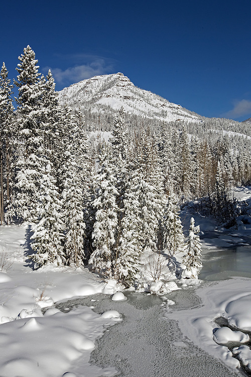 A fresh coating of snow dresses up the winter landscape in Wyoming's Shoshone National Forest.