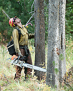 PRICE CHAMBERS / NEWS&amp;GUIDE<br /> A firefighter looks up a tree he will cut down in Leeks Canyon on Tuesday, working to removing dead timber from the fire line.