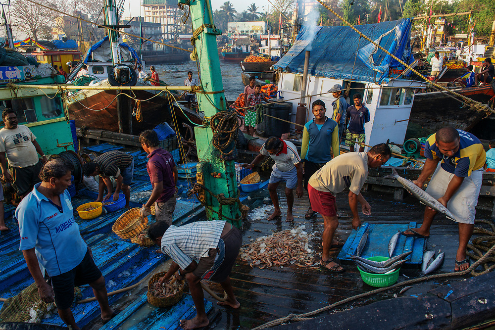 Sassoon Docks are the scene of the frenzied daily delivery of the night's catch. Bearers and traders, many of them female, compete to get the best prices before transporting the fish and seafood on to their destination.