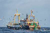 Commercial purse-sein trawler fishing in the pelagic fishing grounds, Cape Canyon Trawl Grounds, South Africa