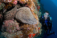 Black Spotted Moray and Diver on Reef Wall<br /> <br /> shot in Indonesia