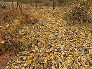 path almost made invisible by fallen autumn leaves