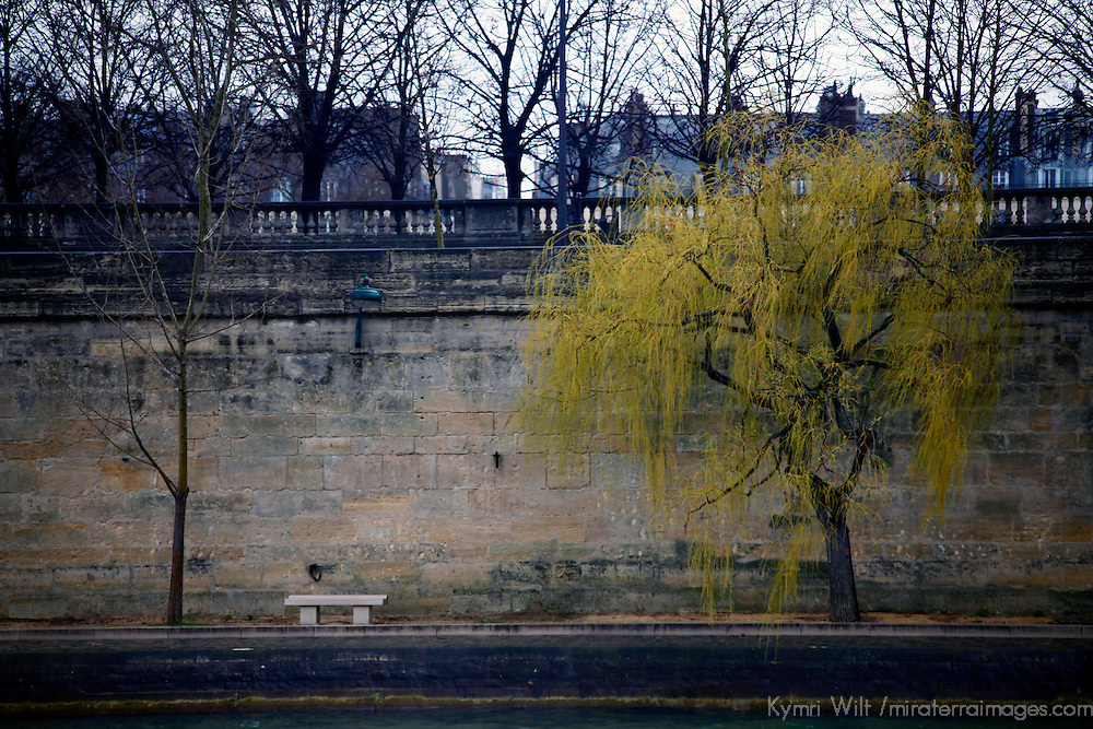 Europe, France, Paris. A tree is the first sign of spring on the Seine River embankment in Paris.