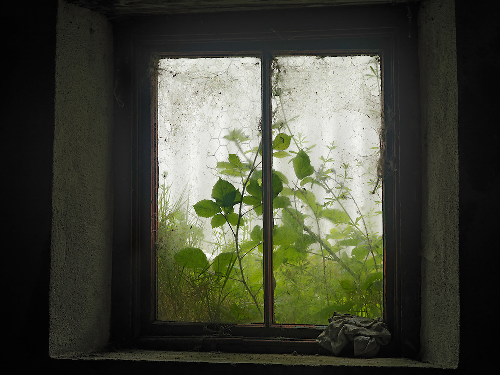 Ireland, Saltee island,  overgrown window in old house
