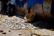 Drying fish in Mangalore, India