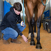 Lauren Wood | Buy at photos.djournal.com<br /> Neil Godfrey of Brandon paints the hooves of his horse Harpo before competing in the Horsemanship category later in the afternoon on Friday, March 10 during the annual MSU Bulldog Classic AQHA Horse Show at the MS Horse Park in Starkville.