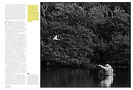 Bird Photographers Getting Too Close For Comfort, AUDUBON MAGAZINE