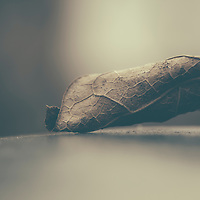 Close up of dried up leaf