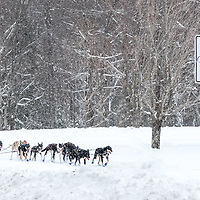 Sandwich Sled Dog Races 45 Miles. The Chinook Trail.