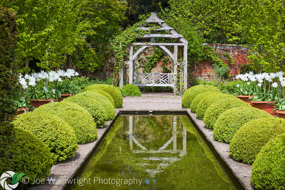 Pots of white tulips brighten the Rill Garden at Wollerton Old Hall Garden, Shropshire - photographed in May.
