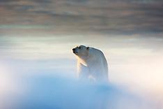 Svalbard #25 2015