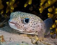 Guam's Tumon Bay Preserve Marine Life