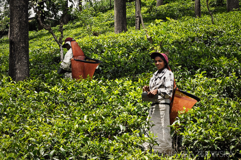 Sri Lanka. Tea pickers from Ella.