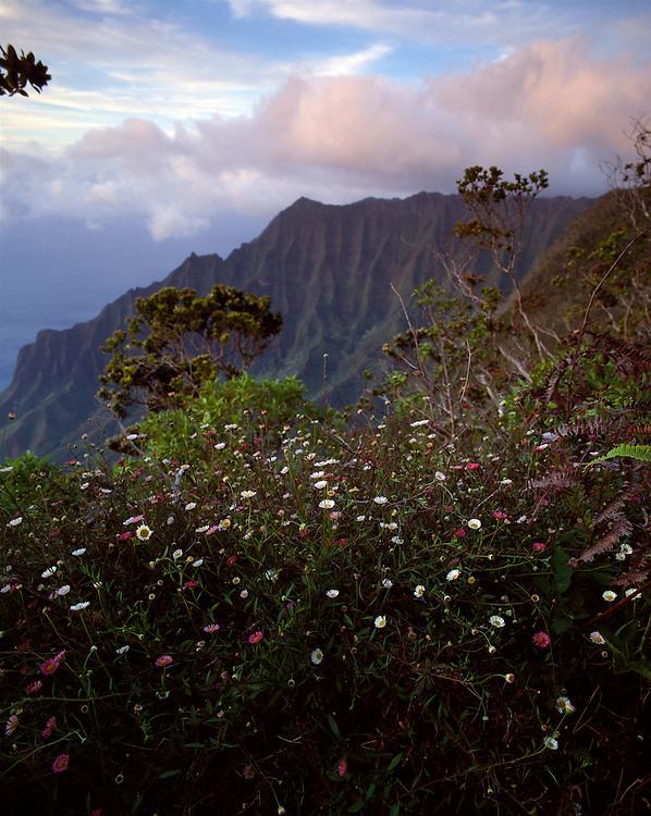 USA, Hawaii, Kalalau Valley seen from lookout in Kokee State Park along Kauai Island's Na Pali Coast