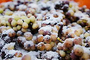 Vidal Blanc grapes sit in a bin after being harvested at Hunt Country Vineyards in Branchport, N.Y., Monday, January 4, 2016. The harvest yields ice wine - a sweeter, heavier and because of the extra work to produce it, often pricier white table wine.  <br /> (AP Photo/Heather Ainsworth)