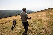 Italy - Alpago, l'agnello dell'Alpago presidio Slow Food