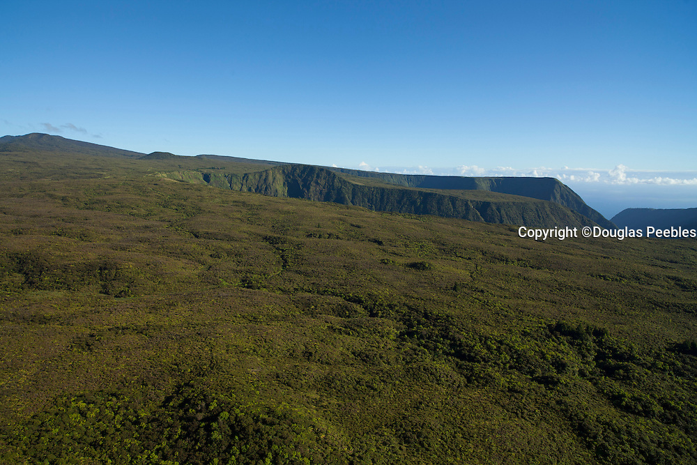 Kohala Forest Reserve, North Kohala, Big Island of Hawaii