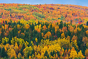 Acadian forest in autumn foliage. Rolling hills. <br />Aroostook<br />New Brunswick<br />Canada
