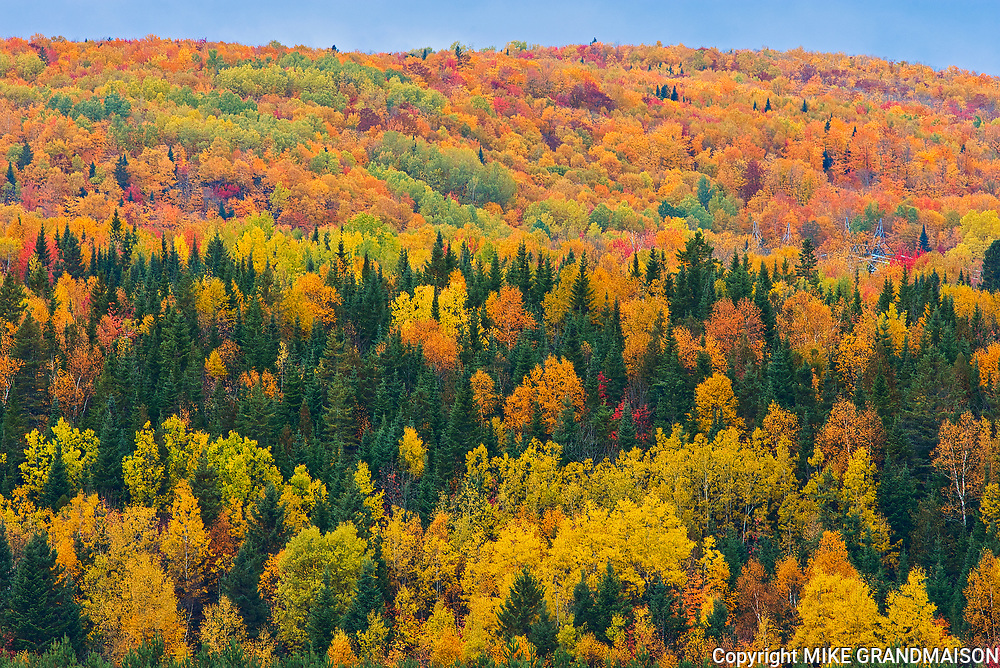 Acadian forest in autumn foliage. Rolling hills. <br />